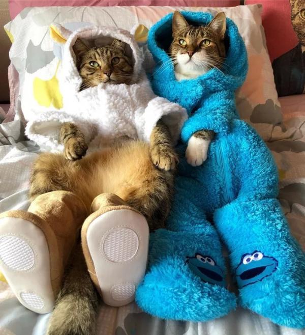 Đại sứ quán Mỹ xin lỗi vì sự cố gửi nhầm email mời dự tiệc đính kèm ảnh chú mèo mặc pyjama