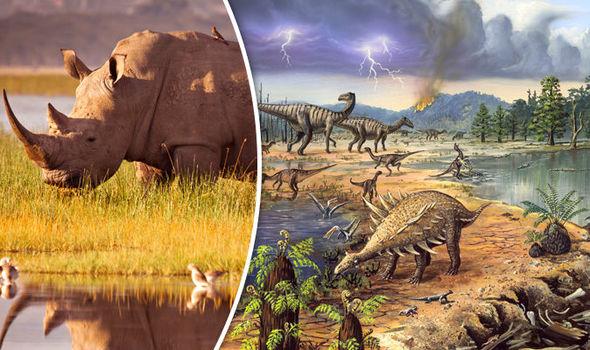 Các loài động vật đang tuyệt chủng nhanh đến mức Trái Đất phải mất ít nhất 3 triệu năm để hồi phục