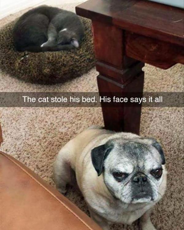 Còn gì buồn bằng đôi mắt của những chú chó khi bị bọn mèo láo toét cướp chỗ ngủ (Kì 1)