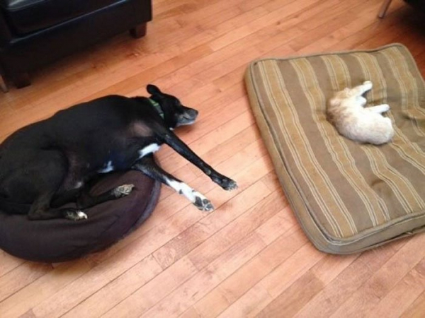 Còn gì buồn bằng đôi mắt của những chú chó khi bị bọn mèo láo toét cướp chỗ ngủ (Kì 2)
