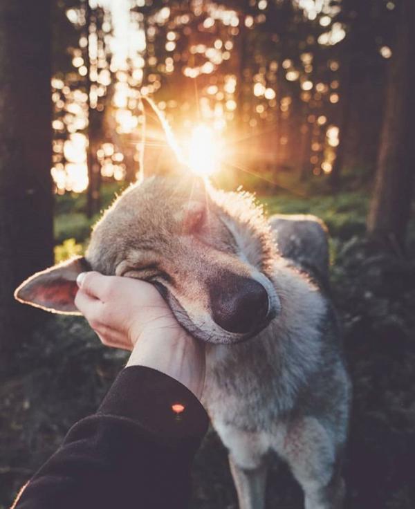 Tan chảy trước những khoảnh khắc tình thương mến thương của các loài vật