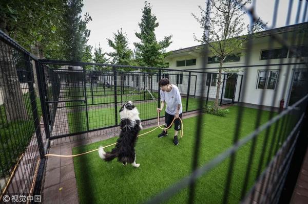 Rich dog là có thật: 'Sen' chi gần 12 tỷ đồng xây biệt thự sang chảnh cho 'boss'