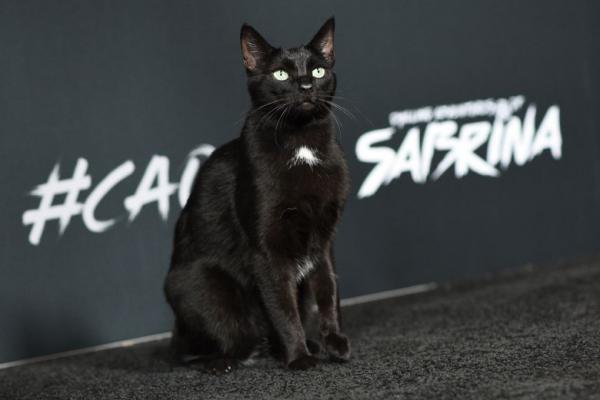 Chú mèo Salem trong 'Những Cuộc Phiêu Lưu Rùng Rợn Của Sabrina' sải bước tự tin tại lễ ra mắt phim