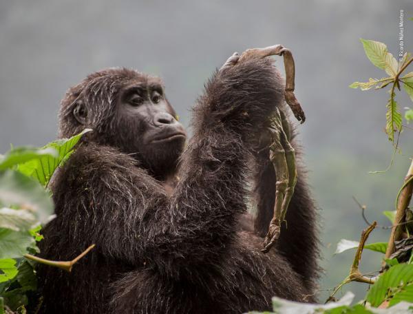 Trải qua đủ cung bậc cảm xúc khi xem chùm ảnh động vật đẹp nhất năm 2018