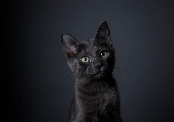 Bạn có biết loài mèo từng bị 'đuổi cùng giết tận' vào thời Trung Cổ?