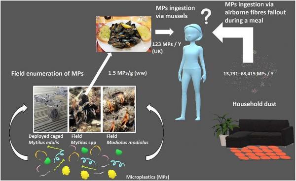 Tìm thấy hạt vi nhựa trong chất thải con người, chứng tỏ chúng ta đang tự đầu độc chính mình