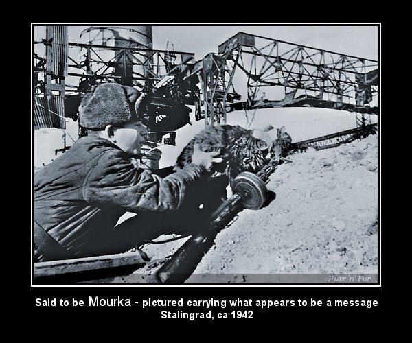 Tuyển tập những chú mèo thời chiến - Kỳ 1: Mèo bộ binh
