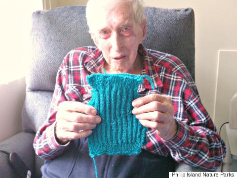 Cụ ông 109 tuổi vẫn miệt mài đan áo len cho những chú chim cánh cụt bị thương vì tràn dầu trên biển