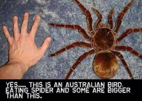 Những lý do khiến chúng ta chỉ nên yêu nước Úc... từ xa mà thôi