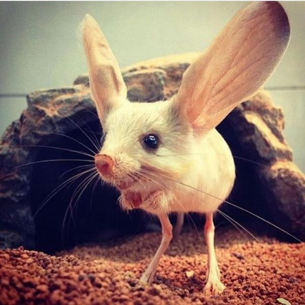 20 loài động vật kỳ lạ khiến bạn phải ngơ ngác tự hỏi 'Ơ! đây là con gì?'