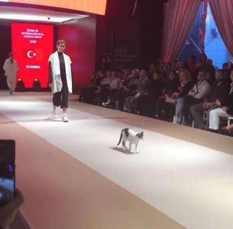 'Quàng thượng' dạy dỗ các người mẫu dáng đi sang chảnh trên sàn catwalk