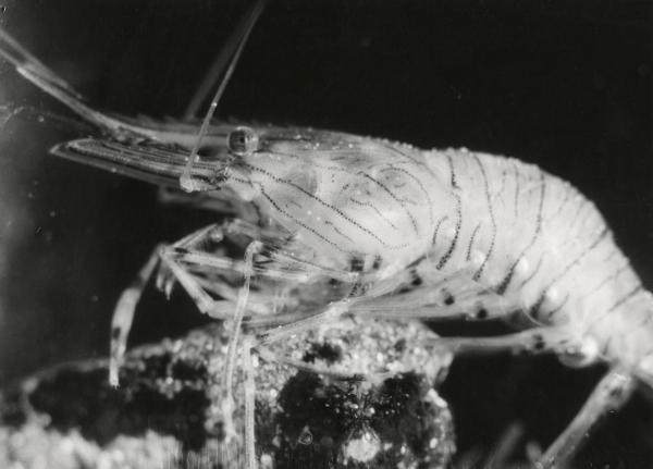 Độc đáo hình vintage của các sinh vật biển có từ thập niên 1920 - 1930