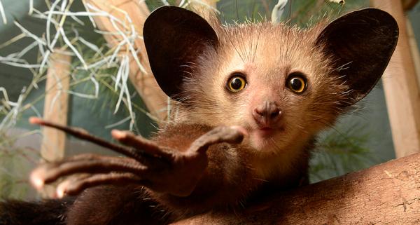 6 loài động vật mang hình thù kì quái và hiếm thấy