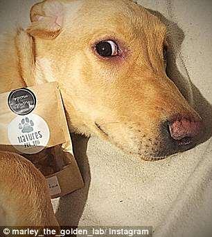 Bị phàn nàn vì đăng hình chó nhiều trên Facebook, cậu bé chuyển sang dùng Instagram và kiếm gần 15 triệu/tháng