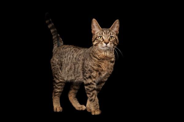 Tin nổi không? Mèo đã tự thuần hóa chính mình và xâm chiếm thế giới từ rất lâu trước đây!