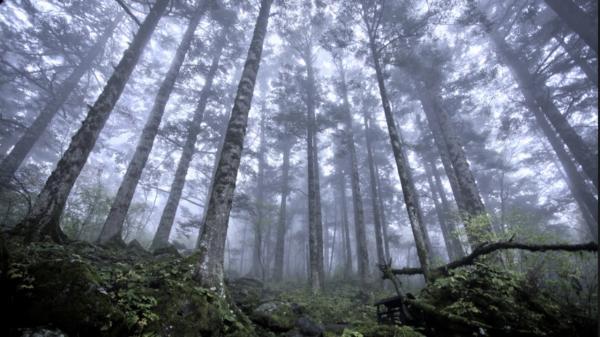 Đoạn clip quay cảnh khu rừng biết hít thở ở Canada rùng rợn đến mức ai xem cũng lạnh gáy
