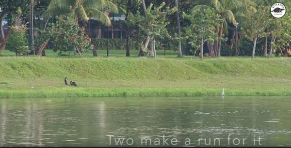 Hỗn chiến vì tranh chấp địa bàn giữa hai gia đình rái cá (có sơ đồ chiến thuật, video trận chiến)