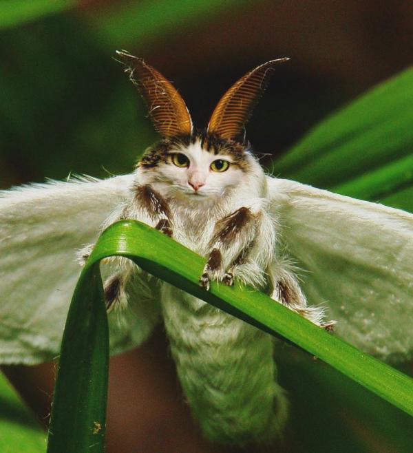 Thử ghép đầu mèo vào bất cứ loài động vật nào mà xem, bạn sẽ thấy thế giới này đáng sợ gấp đôi