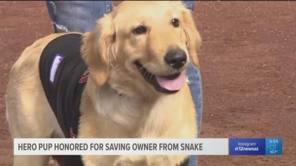 Chú cún anh hùng bị rắn cắn 'méo cả mặt' vì cứu chủ