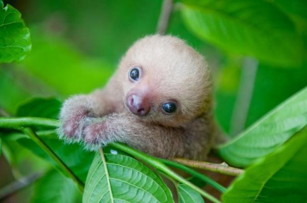 21 bé cưng động vật có thể giúp bạn lấy lại tinh thần trong những ngày buồn chán