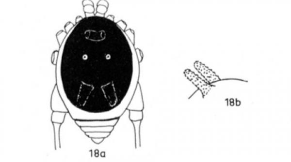 Loài nhện 'đầu chó tai thỏ' Amazon làm kinh ngạc bao người