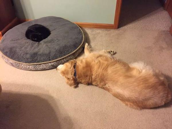 Chú mèo vui mừng khi tìm thấy mùi hương của người bạn đã qua đời
