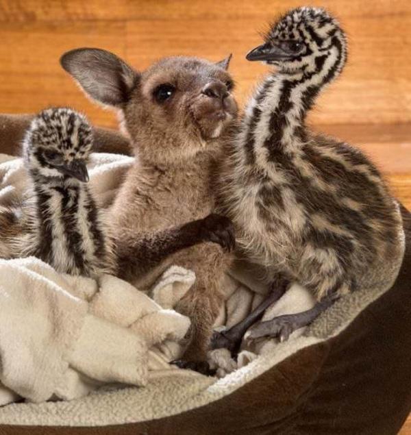 Chào mừng đã đến với Úc - xứ sở của những điều lạ kỳ