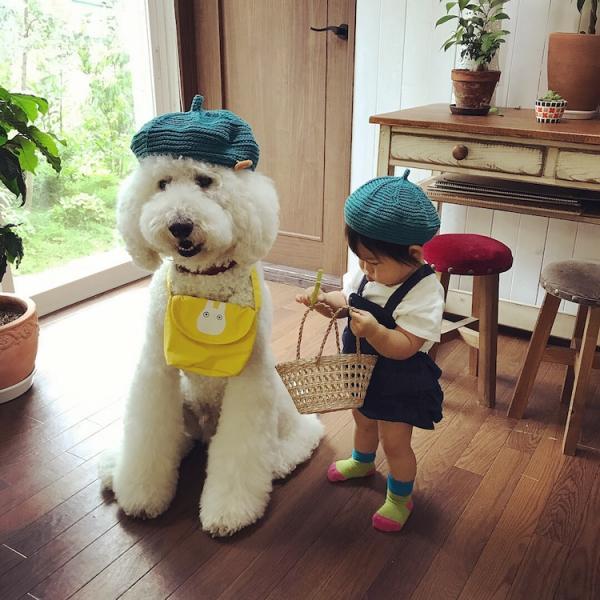 Tim rung rinh khi ngắm nhìn sự kết hợp siêu cấp đáng yêu giữa cô bé 2 tuổi tí hon và chó Poodle khổng lồ