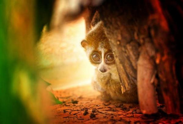 Những loài động vật có vẻ ngoài đáng yêu nhưng lại sở hữu tính 'điên ngầm'