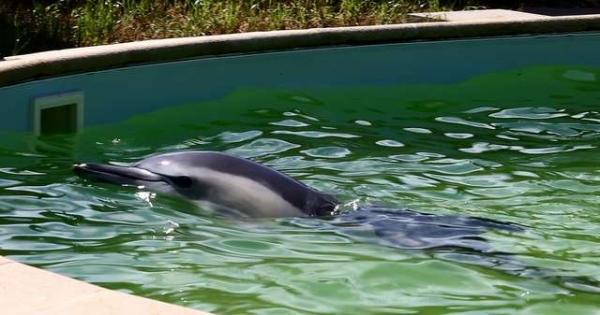 Trung tâm cứu hộ lại giam giữ chú cá heo hơn 10 năm trong bể bơi