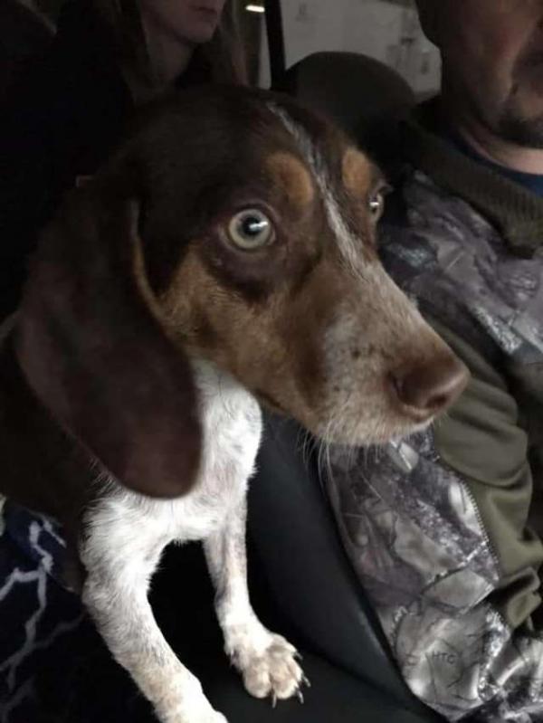 Chú chó 14 tháng tuổi suýt bị bắn chết vì không muốn đi săn