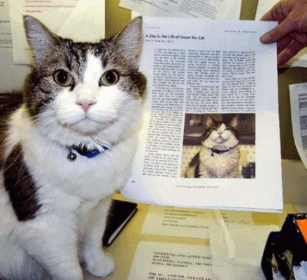 Oscar - 'Chú mèo báo tử' thần bí dự đoán đúng hơn 100 cái chết khiến các nhà khoa học đứng hình