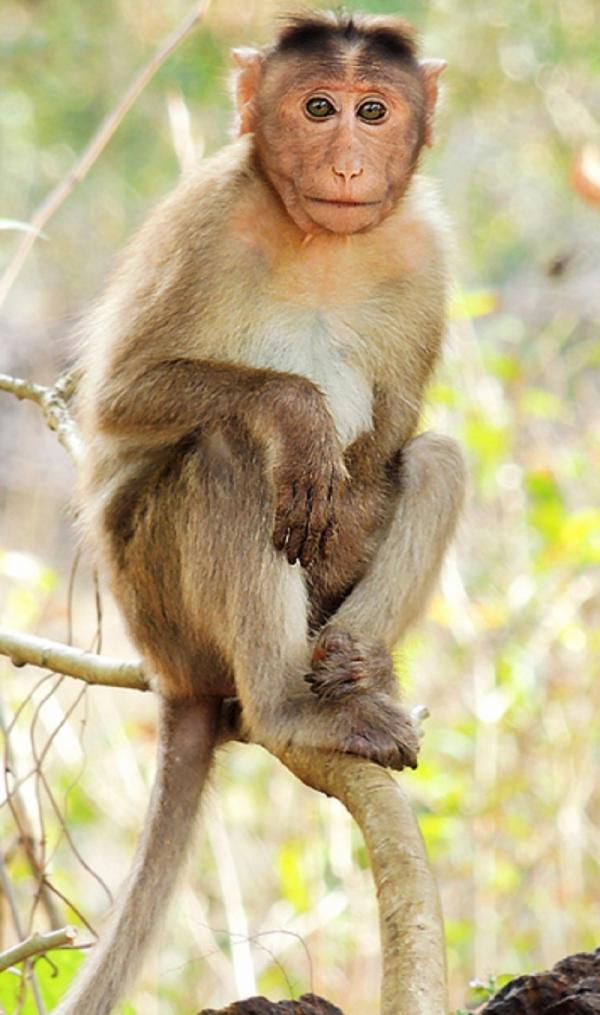 Tỉnh cơn say, chàng trai Trung Quốc 'ngã ngửa' khi biết sắp khuân về nhà... một sở thú