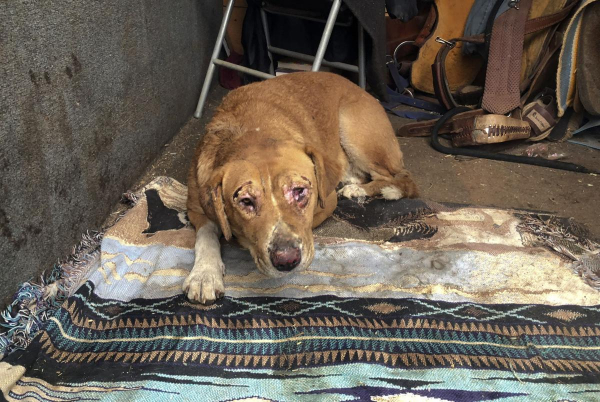 Động vật thảm thương sau khi được giải cứu khỏi đám cháy kinh hoàng ở California