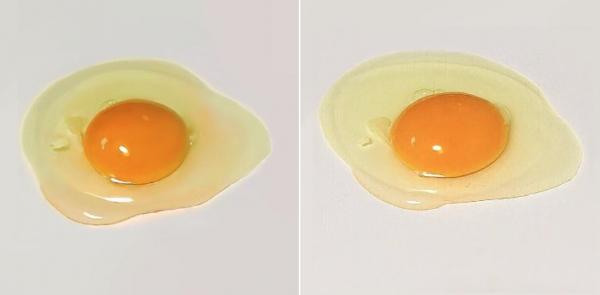Hai quả trứng - một là thật một là tranh vẽ của họa sĩ Nhật Bản, bạn tự tin mình sẽ đoán đúng?