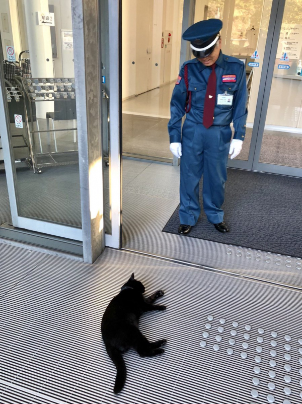 Hai chú mèo kiên trì 'đột nhập' vào một bảo tàng Nhật trong 2 năm nhưng bất thành