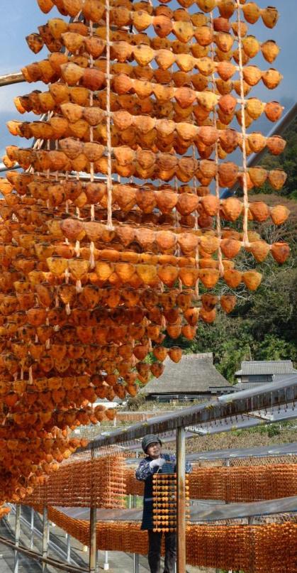 Du lịch Nhật Bản mùa này hãy nhớ để ý chiêm ngưỡng những 'mành treo hồng sấy'