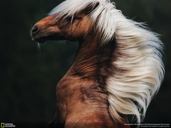 Các bức ảnh nổi bật trong cuộc thi National Geographic Photo năm 2018