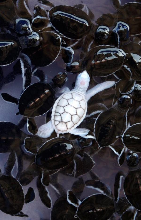 23 động vật bị bạch tạng đẹp huyền diệu như thể đến từ hành tinh khác