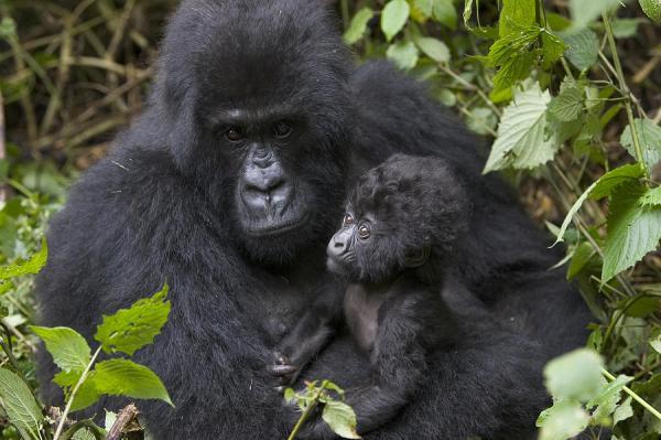 Cùng chiêm ngưỡng 9 ông bố vĩ đại nhất trong vương quốc động vật
