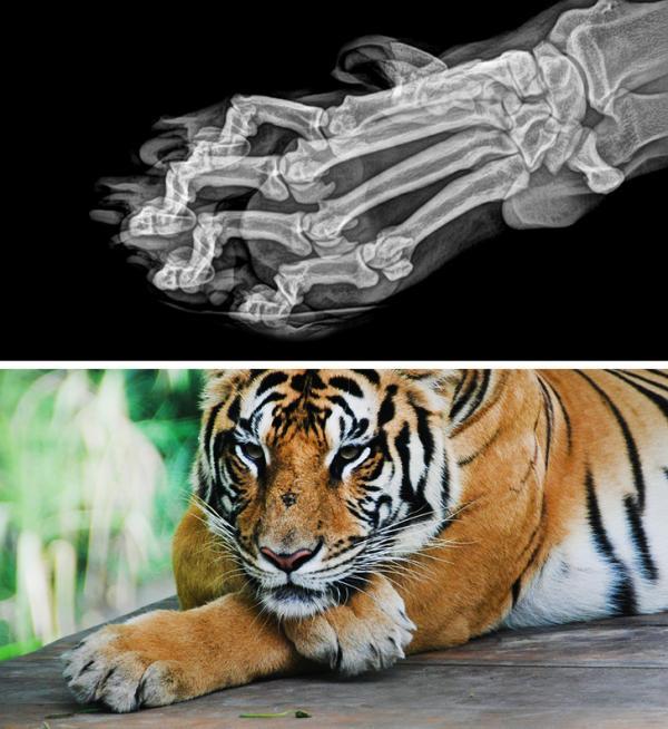 Ảnh chụp X-quang của 14 loài động vật khiến bạn không tin nổi vào mắt mình