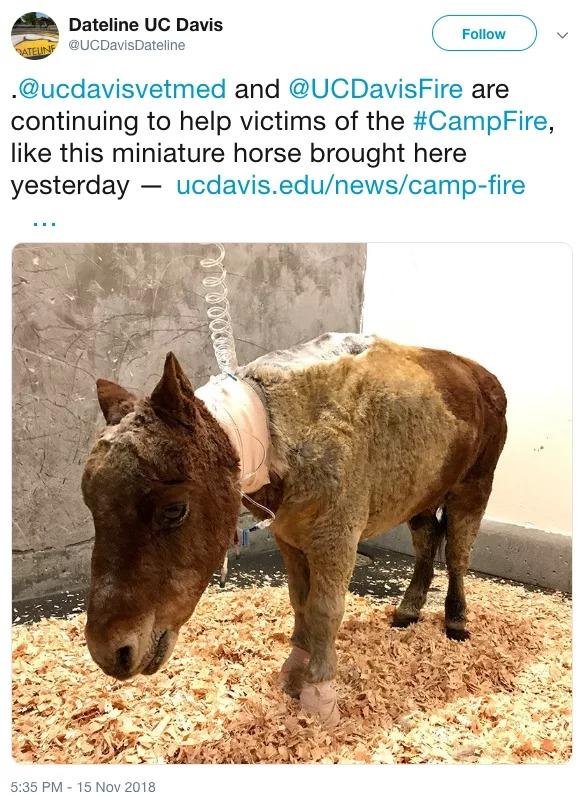 Đoạn clip xúc động khi cô chủ đoàn tụ với mèo cưng may mắn sống sót trong trận cháy rừng tại California