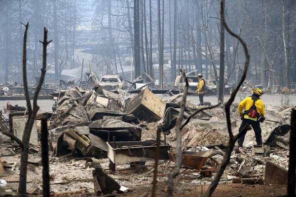 Chú chó bị bỏ rơi trong trận cháy rừng California bỏng nặng do kiên trì bảo vệ nhà hàng xóm