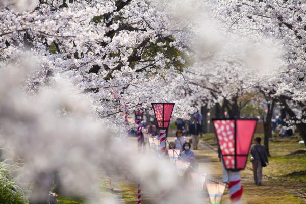 16 địa điểm 'bồng lai tiên cảnh' của Nhật Bản có thể bạn chưa biết