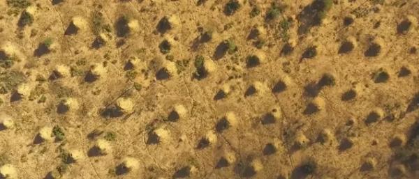 Hàng triệu ụ mối kỳ lạ, to lớn và cổ như Kim Tự Tháp vừa được tìm thấy ở Brazil