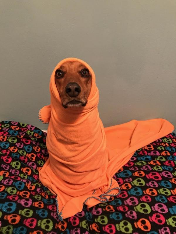 20 tấm hình tình cảm khi thú cưng mong ngóng 'sen nhí' chào đời