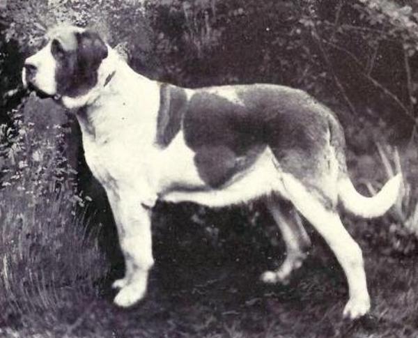 Cùng chiêm ngưỡng sự thay đổi của các giống 'cún' nổi tiếng qua thời gian