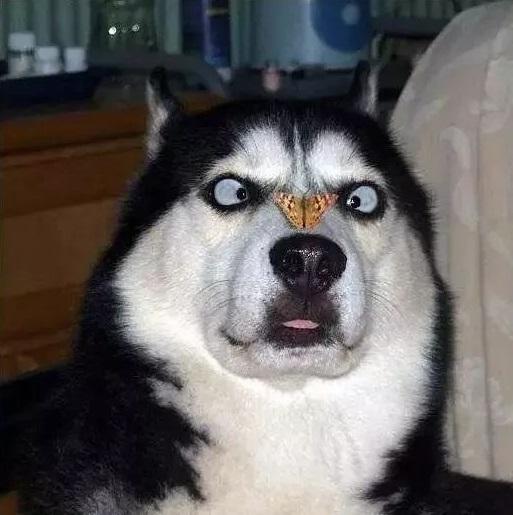 Loài chó phát hiện được ai là kẻ xấu trong một nốt nhạc, nhưng chúng làm cách nào?