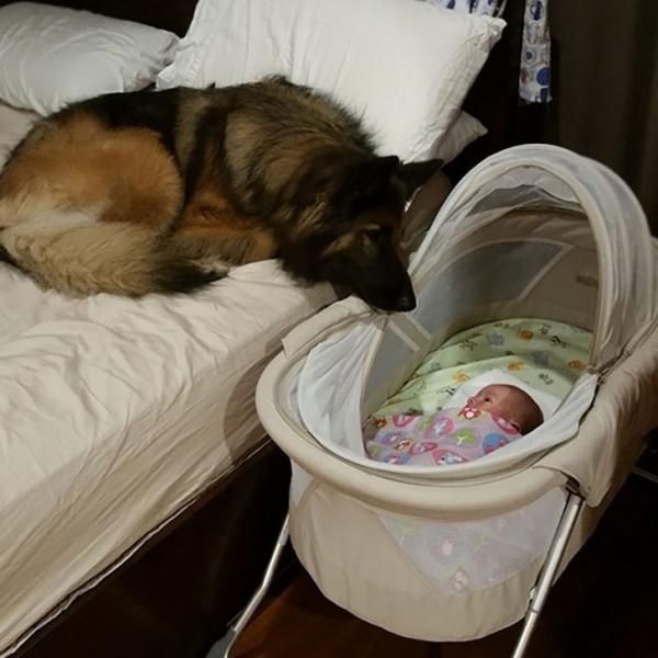 Loạt ảnh chứng minh tình yêu vô điều kiện của những chú chó đối với chủ của mình