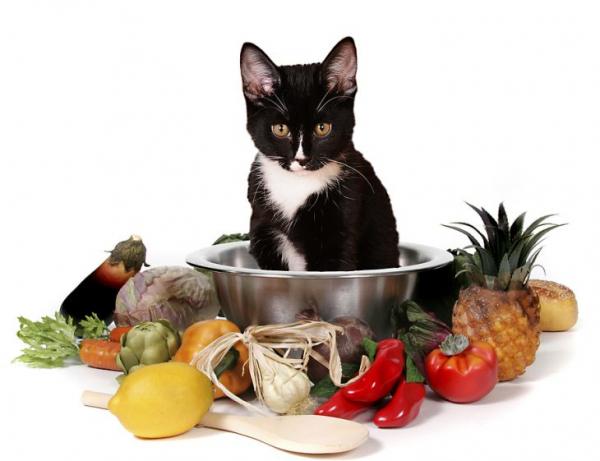 Các 'sen' cần lưu ý: Đừng cố bắt 'boss' mèo ăn chay nếu không muốn bị nhận án phạt!